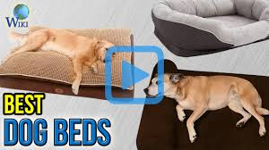 Top Rated Orthopedic Dog Beds by Top 10 Dog Beds Of 2017 Video Review