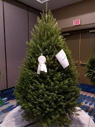 Nordmann Fir Christmas Tree Seedlings by Evergreen Acres Christmas Tree Farm Home Facebook
