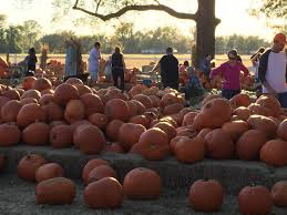 Carmichaels Pumpkin Patch Oklahoma by Bixby U201cpumpkin Patch U201d U2013 A Fun Family Or Couple Activity Creating