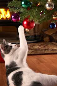Are Christmas Trees Poisonous To Dogs Uk by How To Keep Your Cat Off The Christmas Tree Cathealth Com