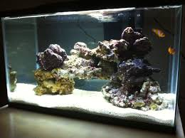 Thoughts/ideas On My Scape - Aquascaping Forum - Nano-Reef.com ... Aquascape Designs Surripuinet Aquascaping Live Rocks In Your Saltwater Aquarium Columns A Saltwater Tank Callorecom Need Ideas General Rfkeeping Discussion Week 3 Aquascaping 120 Gal Rimless Update Youtube 55g Vertical Tank Ideas Saltwaterfish Forum Aquascape With Rocks Google Search Aquariums Pinterest Bring Back The Wall Rock News Reef Builders Walls For Building Tiger Fish Aquascapinglive Rock Help Tcmas Forums