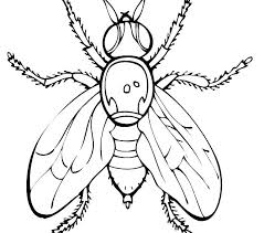 Fly Coloring Page Dragonfly Pages Printable Sheets