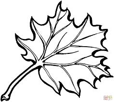 Eastern Black Oak Leaf
