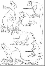 Astounding Australian Animals Coloring Pages With Printable Animal And Sea