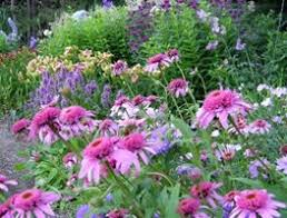 A Rustic Perennial Paradise Plant Country Gardens Caledon ON