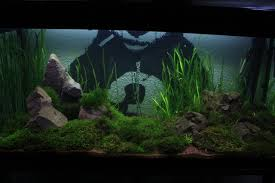 Aquascaping | Explore Aquascaping On DeviantArt Aquascape Designs For Your Aquarium Room Fniture Ideas Aquascaping Articles Tutorials Videos The Green Machine Blog Of The Month August 2009 Wakrubau Aquascaping World Planted Tank Contest Design Awards Awesome A Moss Experiment Driftwood Sale Mzanita Pieces Two Gardens By Laszlo Kiss Mini Youtube Warsciowestronytop