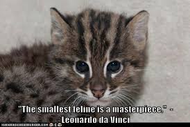 cat quotes quotes about cats 804 quotes