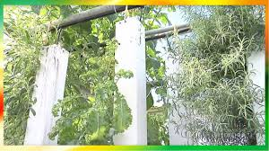 Backyard Greenhouse Aquaponics Tips (DIY) - YouTube Myfood Permaculture And Smart Aquaponic Greenhouse How Do I Get Started In Aquaponics Picture Fish Tank Ft At Back Above Grow Tribe Awesome Backyard Home Wamp4 Youtube Ezgro Garden Hydroponic Vertical Container Kits Introduction To Photo With Terrific Developing Our System The Uk To Build Your Own Aquaponics Fish Tank Diy Maret 2017 Greenhouse Outdoor Fniture Design Ideas Sistem For Aquaponic February 2015