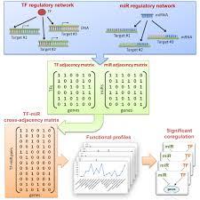 Graphs In Molecular Biology BMC Bioinformatics Full Text