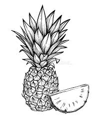 Hand Drawn Vector Illustration Pineapple Exotic Tropical Frui