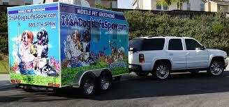 mobile cat grooming mobile pet grooming murrieta ca it s a s spaw