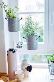 neues jahr frische kräuter für die küche und ingwertee