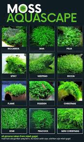 237 Best Aquascaping & Betta Images On Pinterest | Planted ... Photo Planted Axolotl Aquascape Tank Caudataorg New To Hobby Friend Wanted Make An For As Cheap Basic Forms Aqua Rebell Huge Tutorial Step By Spontaneity James Findley Aquascaping Videos The Green Machine Aquarium Beautify Your Home With Unique Designs Aquascape Waterfall Its Called Strenght Of A Thousand Stone Youtube September 2010 The Month Sky Cliff Aquascaping 149 Best Images On Pinterest Ideas Advice Please 3ft Forum
