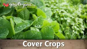 Organic Gardening Blog | Organic Gardening Advice | Organic ... High Quality Organic Ftilizer And Garden Supplies Welcome You Have Discovered Black Jungle Exotics The Natural Choice Outlet Coupon Codes 2018 Columbus In Usa 20 Off Any Single Item Promos Midwest Gardeners Supply Coupon Codes Ttodoscom How Can Tell If That Is A Scam Reading Buses Promo Code Supply Company View Modern Rooms Colorful Design Coupons Promo Shopathecom Upcodelocation Urban Farmer Seeds