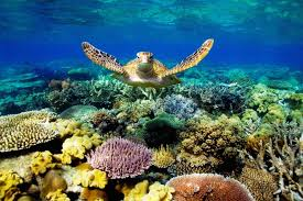 Coral Reef Wallpapers HD Group 76