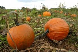 Pumpkin Patch Milwaukee by These 5 Charming Pumpkin Patches In Delaware Are Picture Perfect