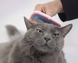 mobile cat grooming groom go mobile pet grooming staten island ny