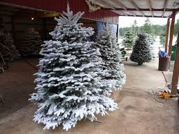 6 Ft Flocked Christmas Tree Uk by Images Of Pre Lit 6ft Christmas Tree Halloween Ideas