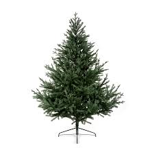 6ft Christmas Tree by Glenshee Spruce Christmas Tree