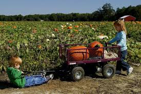 Best Pumpkin Patch Snohomish by Guide To Seattle Area U Pick Pumpkin Patches Corn Mazes And Farm