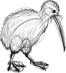 How To Draw Kiwi Bird Coloring Pages