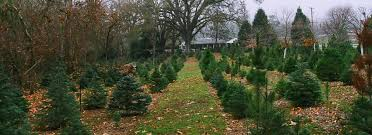 Santa Cruz County Christmas Tree Farms by 5 Places To Cut Real Christmas Trees In California U2013 Ca Limited