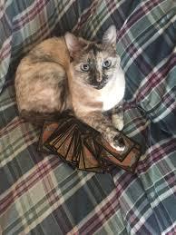 Cat Deck Mtg Modern by Musings On Mtg