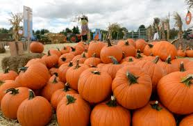 Pumpkin Patch Littleton Co by 4 South Metro Place To Pick Pumpkins With The Family