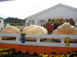 Live Oak Pumpkin Patch Santa Cruz by Exploring Hell On Earth And Nearby Paradise Traversing The