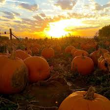 Pumpkin Patch Kiln Mississippi by 1181 Best Fotos Images On Pinterest Drawings Tutorials And Boats