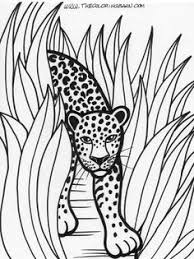 Rainforest Printable Coloring Pages