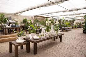 zimmerpflanzen natürliche luftfilter gärtnerei hupp