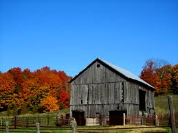 15 Beautiful Fall Pictures That Prove It's The Best Time Of The Year Xlentcrap Barns Flowers Stuff 2009 In Vermont The Fall Stock Photo Royalty Free Image A New England Barn Fall Foliage Sigh Farms And Fecyrmbarnactorewmailpouchfallfoliagetrees Is A Perfect Time For Drive To See National Barn Five Converted Rent This Itll Make You See Red Or Not Warming Could Dull Tree Dairy Cows Grazing Pasture With Dairy Barns Michigan Churches Mills Covered Mike Of Nipmoose Engagement Beauty Pa Leela Fish Rustic Winter Scene Themes Summer Houses Decorations