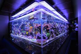 10000k led aquarium light 1000 aquarium ideas