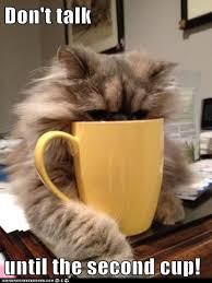 cat coffee 42 best adorable cat stuff images on animals