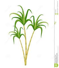 Sugarcane Plantation Stock Illustrations 35 Vectors Clipart