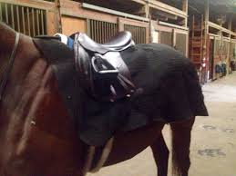 November | 2014 | Love && Horses Bullhide Belt Coupons Deals Direct Heaters Equine Couture Joy Saddle Pad Smart Scrubs Promo Code Best Coupons Western Schools Transfer Window Deals 2018 Up To 85 Off Gucci Verified Couponslivesunday Horse Equine Traformations Coupon Advertising Ideas Horseloverz Com Free Shipping August Shrockworks Discount March 2019 Apple Calendar Back In The Saddle Coupon Bob Evans Military Most Updated Lovesaccom Coupon Code 10 15 Horseloverz Competitors Revenue And Employees Owler