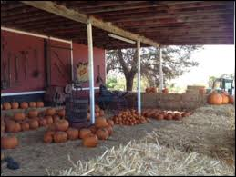Best Pumpkin Patch In San Bernardino County by Greenspot Farms Pumpkin Patch Mentone Ca Photos U0026
