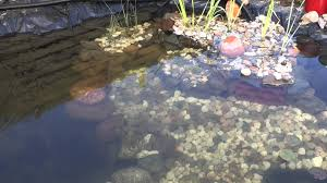 72 hours after installing uv c filter in our pond