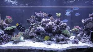 Reef Tank Aquascaping Home Design Aquascaping Aquarium Designs Aquascape Simple And Effective Guide On Reef Aquascaping News Reef Builders Pin By Dwells Saltwater Tank Pinterest Aquariums Quick Update New Aquascape Of The 120 Youtube Large Custom Living Coral Nyc Live Rock Set Up Idea Fish For How To A Aquarium New 30g Cube General Discussion Nanoreefcom Rockscape Drill Cement Your Gmacreef Minimalist 2reef Forum