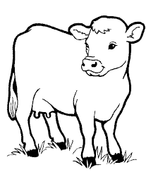 Little Cow Preschool Coloring Pages Farm Animals