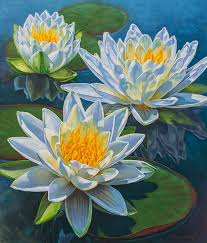 34 best Water Lilies and Lotuses images on Pinterest
