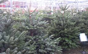 Fortunoff Christmas Trees Staten Island by 100 Christmas Tree Store In Staten Island Staten Island Mall