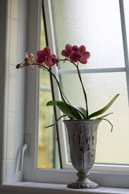 Best Plant For Dark Bathroom by Best Houseplants 9 Indoor Plants For Low Light Gardenista