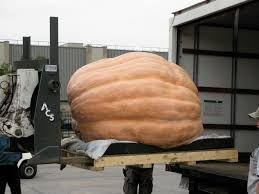 Atlantic Giant Pumpkin Record by World Record Pumpkin Archives Plant Talk