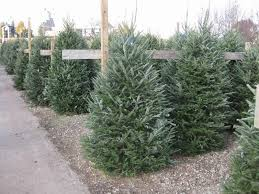 Here At Sherwood Forest We Carry The Largest Selection Of Living Christmas Trees That Are Home Grown In Michigan Search Your Perfect Tree
