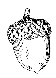 Acorn Drawing Cliparts