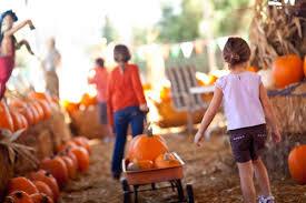 Sunnyside Pumpkin Patch by Fall Pumpkin And Harvest Festivals 2017 In Colorado The Denver Ear