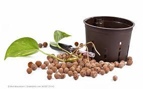 hydrokultur für zimmerpflanzen tipps für geeignete