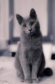russian cat names if this will be when she grows up my grandson s